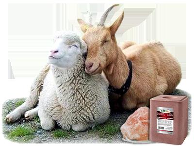 Каменна сол от официалния вносител Едит 5 - Георги Семов - Внос и търговия с хранителни добавки за животни